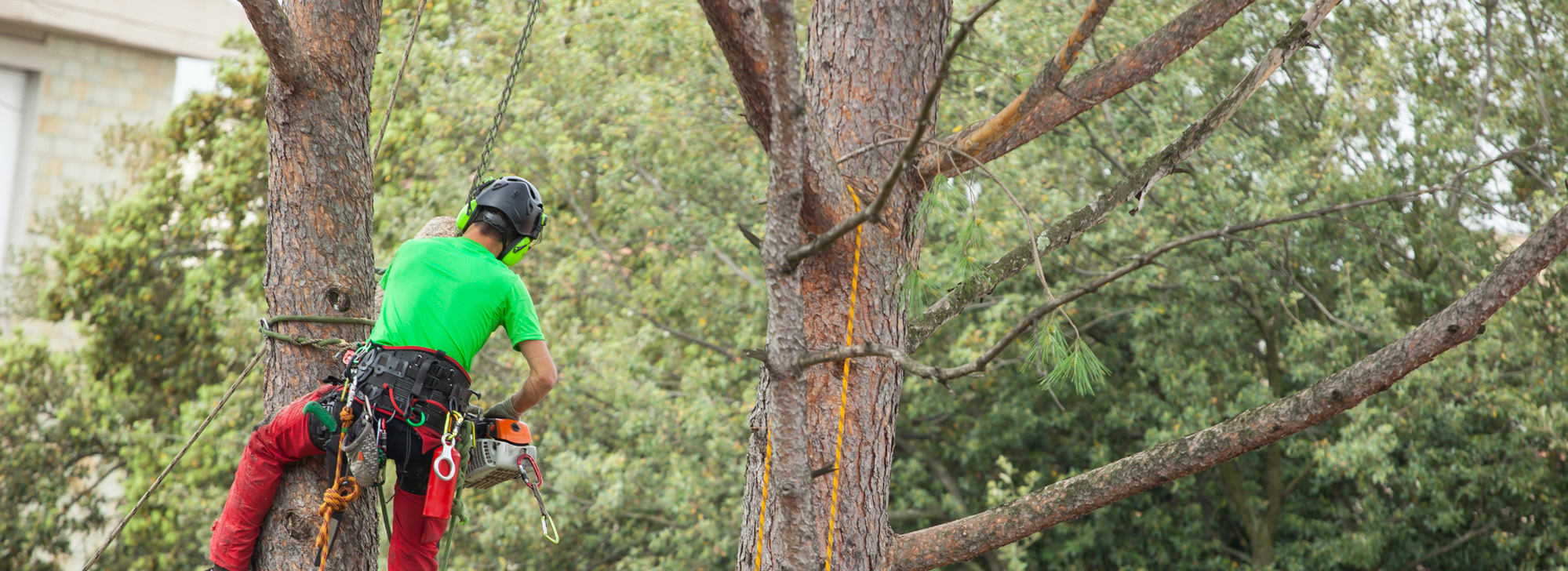 tree services - man pruning a tree